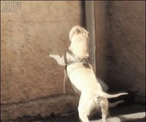 Pies łamiący prawa grawitacji