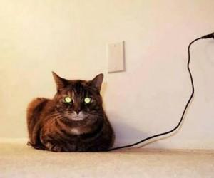Kot naładowany do pełna