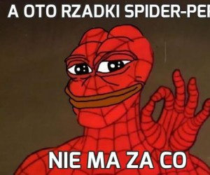 A oto rzadki Spider-pepe