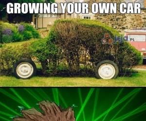 Groot hoduje samochód