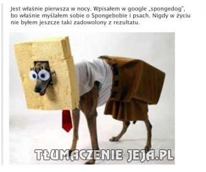 Spongedog Kanciastoporty