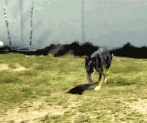 Mistrzowskie skakanie na skakance