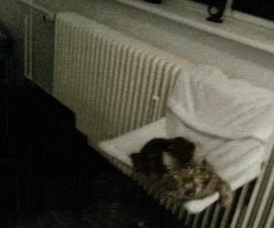 Zawsze to robię, gdy mój kot ziewa