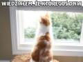 Po co kotu pies?