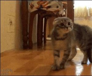 Zapomniałem jak być kotem