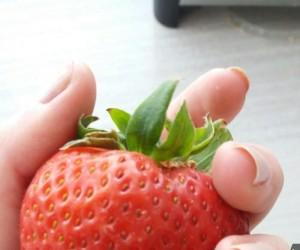 Ogromna truskawa, czy małe dłonie?