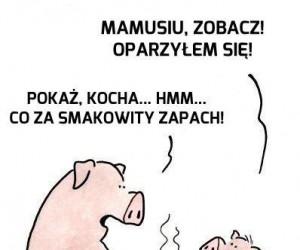 Życie świni jest pełne niebezpieczeństw
