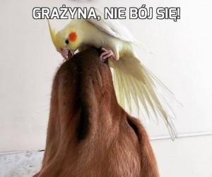 Grażyna, nie bój się!