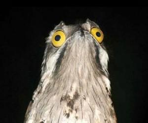 Epicki ptak