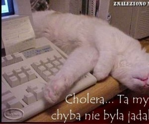 Kotek zjadł myszkę