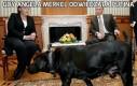 Gdy Angela Merkel odwiedzała Putina