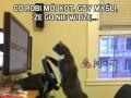 Co robi mój kot, gdy myśli, że go nie widzę...