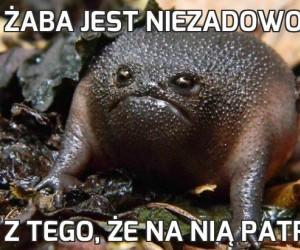 Żaba jest niezadowolona