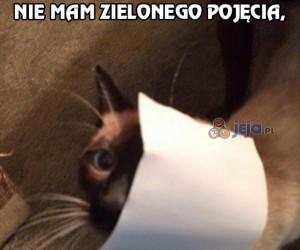 Wiem, że to Ty koteł!
