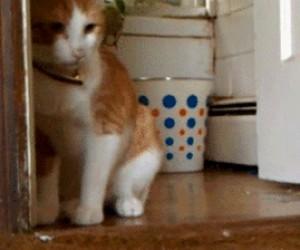 Kot vs Jaszczurka