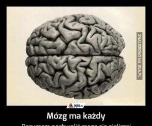 Mózg ma każdy
