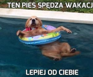 Ten pies spędza wakacje