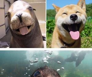 Foki to tak naprawdę wodne psiaki