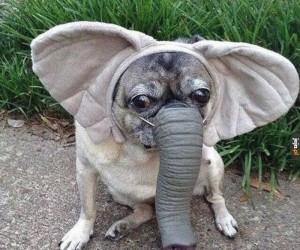 Małe, urocze słoniątko