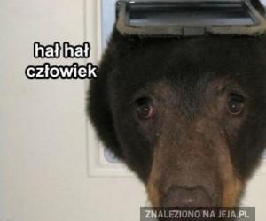Niedźwiadełkeł domowy