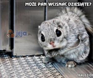 Dzisiaj w windzie spotkałem wiewiórkę