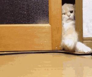 Złapać kabel, polizać drzwi