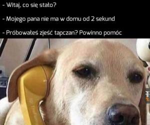 Psie pogotowie