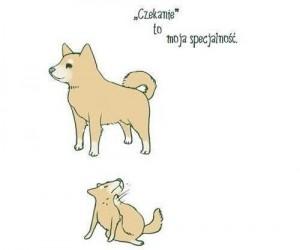 Historia psa