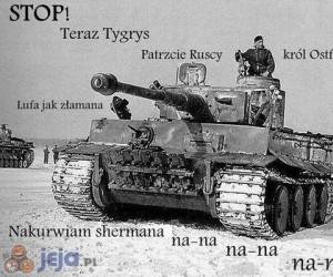 Stop! teraz tygrys