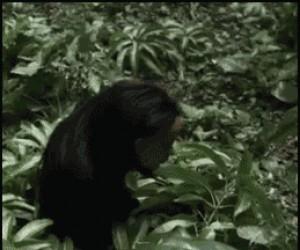 Trolująca małpa