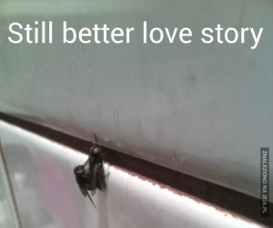 Nadal lepsza historia miłosna niż Zmierzch