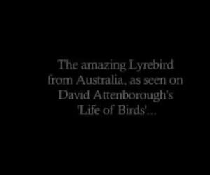 Znałeś ten gatunek ptaków?