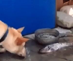 Pies próbuje uratować rybę