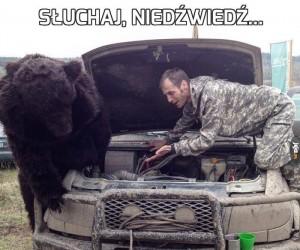 Słuchaj, niedźwiedź...