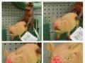 Biedna świnka...