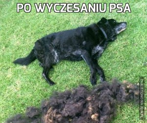 Po wyczesaniu psa