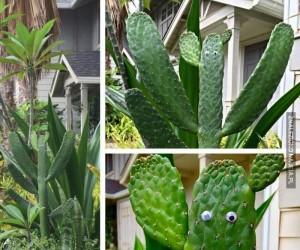 Kaktusowy strażnik
