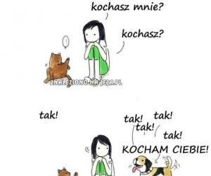 Kot a pies