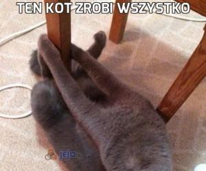 Ten kot zrobi wszystko