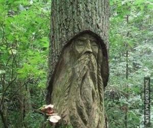 Strażnik lasu