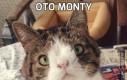 Oto Monty