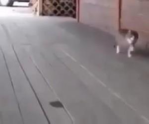 Mimo wszystko z tym kotem jest coś nie tak