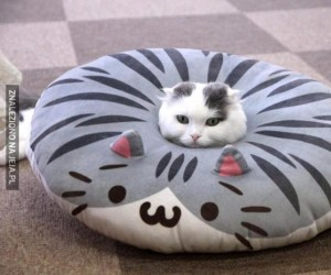 Żeby zrozumieć poduszkę, musisz zostać poduszką