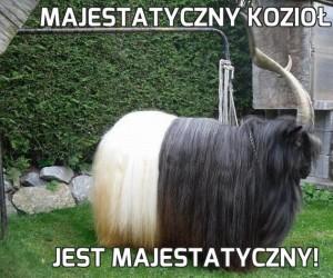 Majestatyczny kozioł