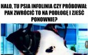 Psia infolinia