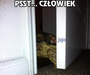 Żółwik ma coś na sumieniu