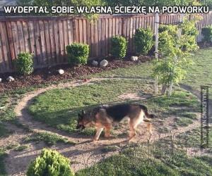 Wydeptał sobie własną ścieżkę na podwórku