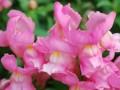 Niesamowita przemiana kwiatów