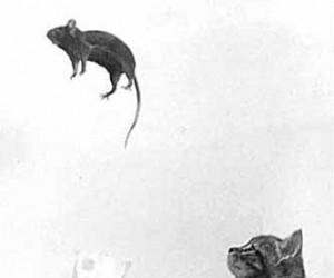 Latająca mysz