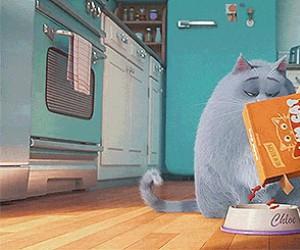 Jak mój kot reaguje na jedzenie